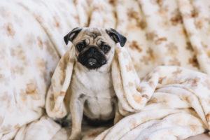 Pensione per cani prezzi