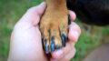 Corso base di addestramento per cani Busto Arsizio